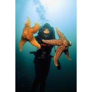 Erica Holds Giant Sea Stars, Platform Hilda 60'