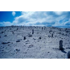 Caliche Forest, San Miguel Island