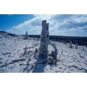 Caliche, San Miguel Island #99