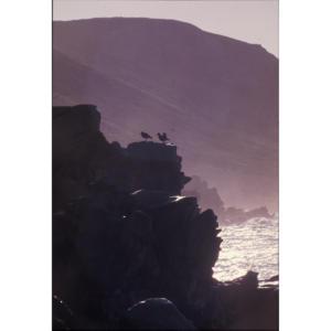 Sea Mist, San Miguel Island